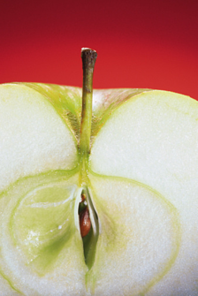 Apple Core Beliefs resized 600
