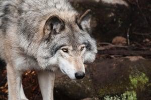 animal-animal-photography-blur-397863